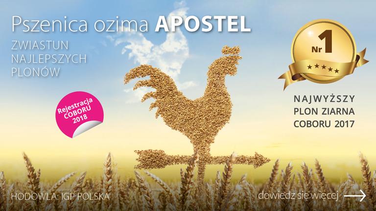 H_019526-CEB-Baner-OC-www-pszenica-ozima-APOSTEL