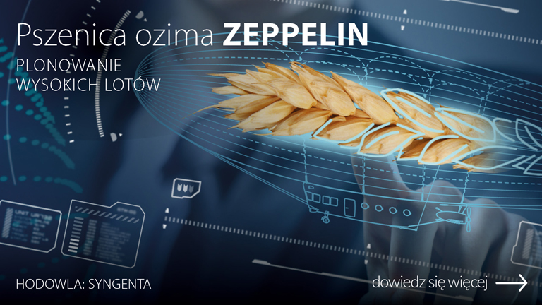 H_019526-CEB-Baner-OC-www-pszenica-ozima-ZEPPELIN-1